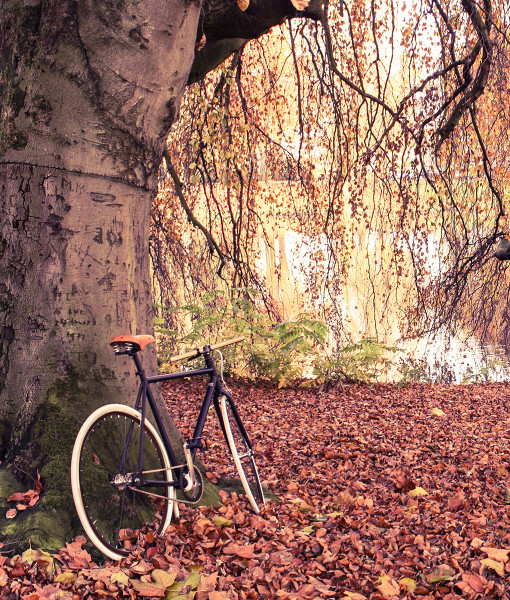fixed gear forest